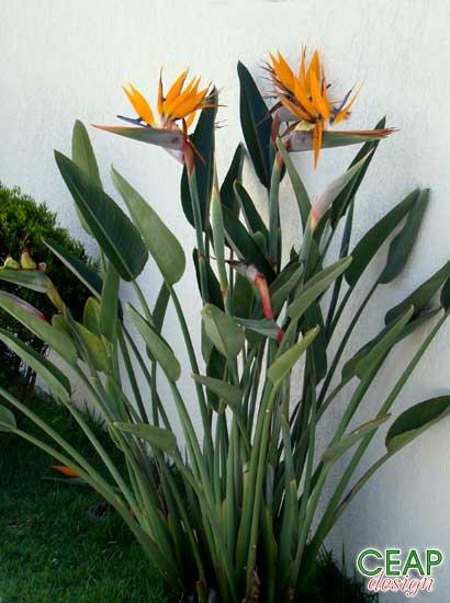 plantas para jardins grandes: de vento forte sua inflorescência pode ser utilizada para flor de