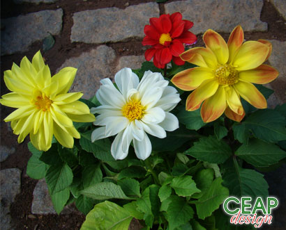 Flores para jardim sol pleno datoonz plantas para jardim - Plantas pleno sol ...