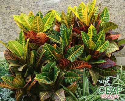 Plantas jardim pleno sol conhea algumas plantas que - Plantas pleno sol ...